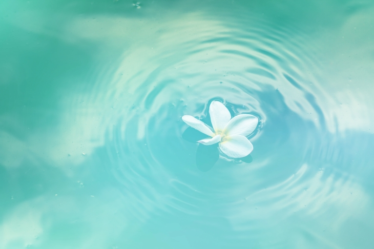 floating blossom